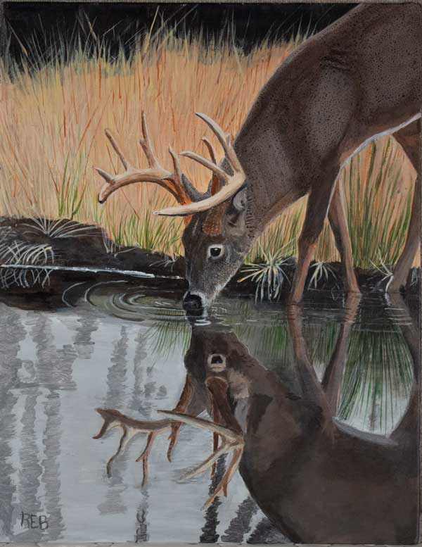 Painting of a buck drinking